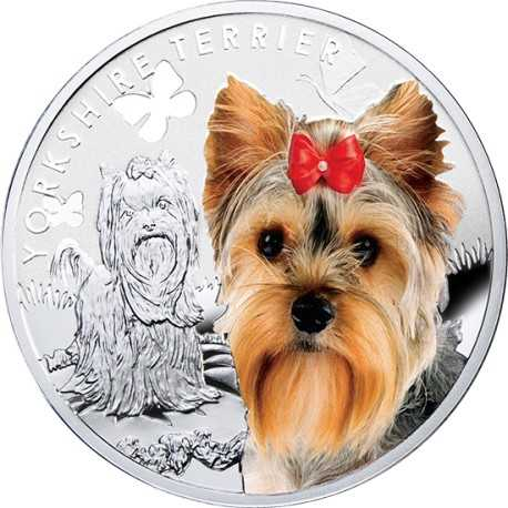 York Shire Terrier, Silver Coin